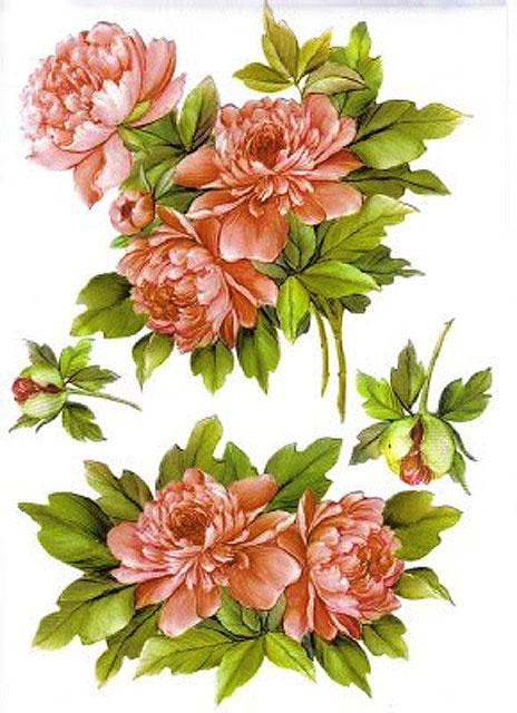 Картинки для декупажа - цветы пионы